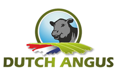 Dutch_angus